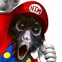 Honkeytonk Monkey