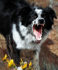 ConeGamers_Dog