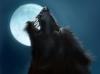 Hakumawolf