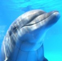 Lonely_Dolphin